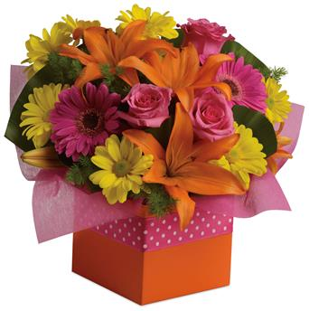 Category: Top 10 for NZ Florists florists. Code: A47. Name: Starburst Splash. Description: Joyful moments call for happy flowers! This box of blooms does the trick with orange lilies, pink roses, yellow daisies and hot pink gerberas. Price: NZD $74.95 Options: 1. Add Chocolates. 2. Add a Teddy Bear. 3. Add both.