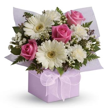 Code: A60. Name: Sweet Thoughts. Description: Share your sweet thoughts with this lady like arrangement of pure white gerberas, candy pink roses and soft white carnations. Price: NZD $67.90