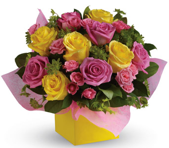 Category: Roses. Description: Red Roses, coloured Roses, Single and dozen bunches delivered in the Wellington  region. Price: NZD From $39.95.